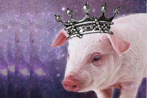 HGO The Enchanted Pig
